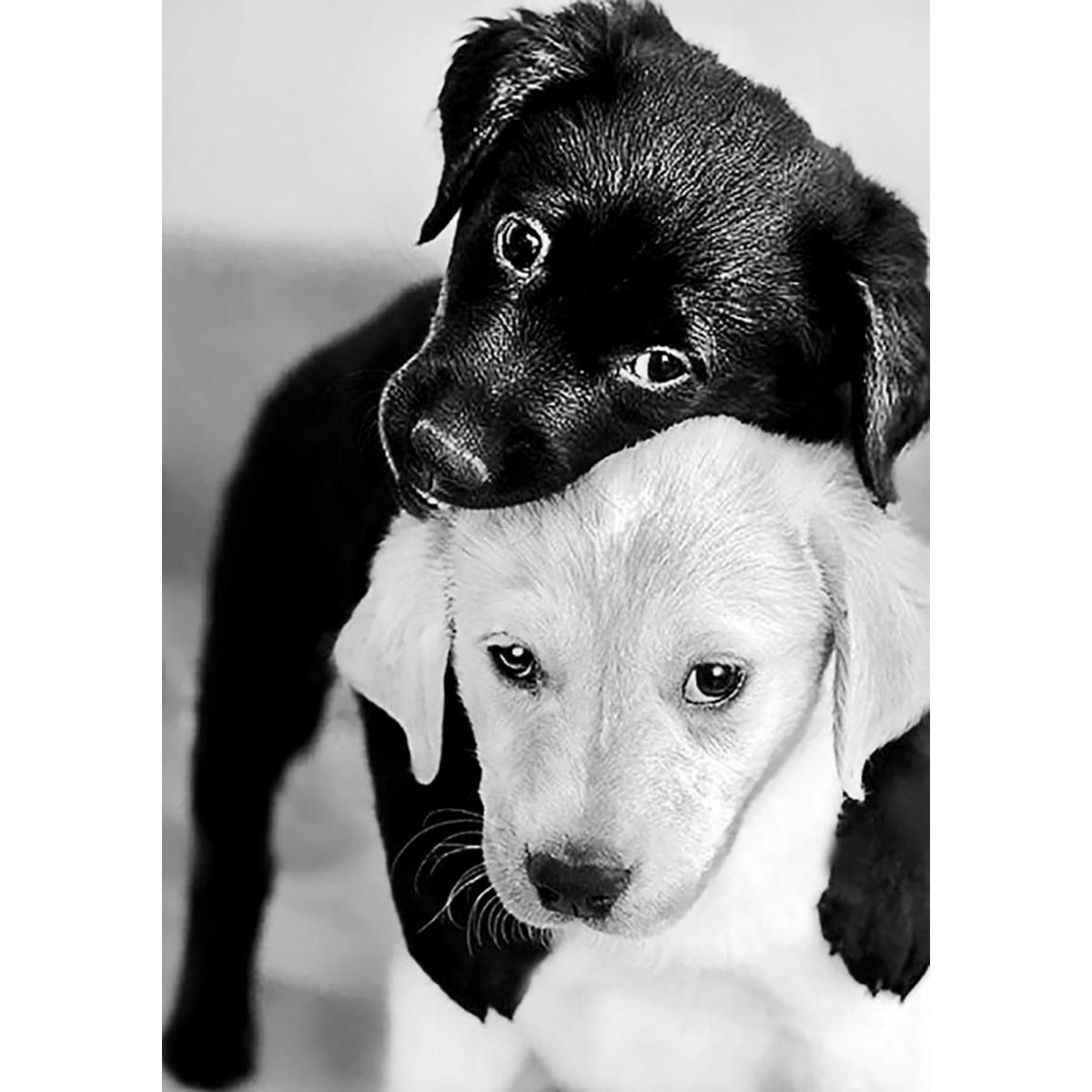 Ag 453 Набор д/изготовления картин со стразами 'Черный и белый щенок' 20*30(19*27)см Гранни