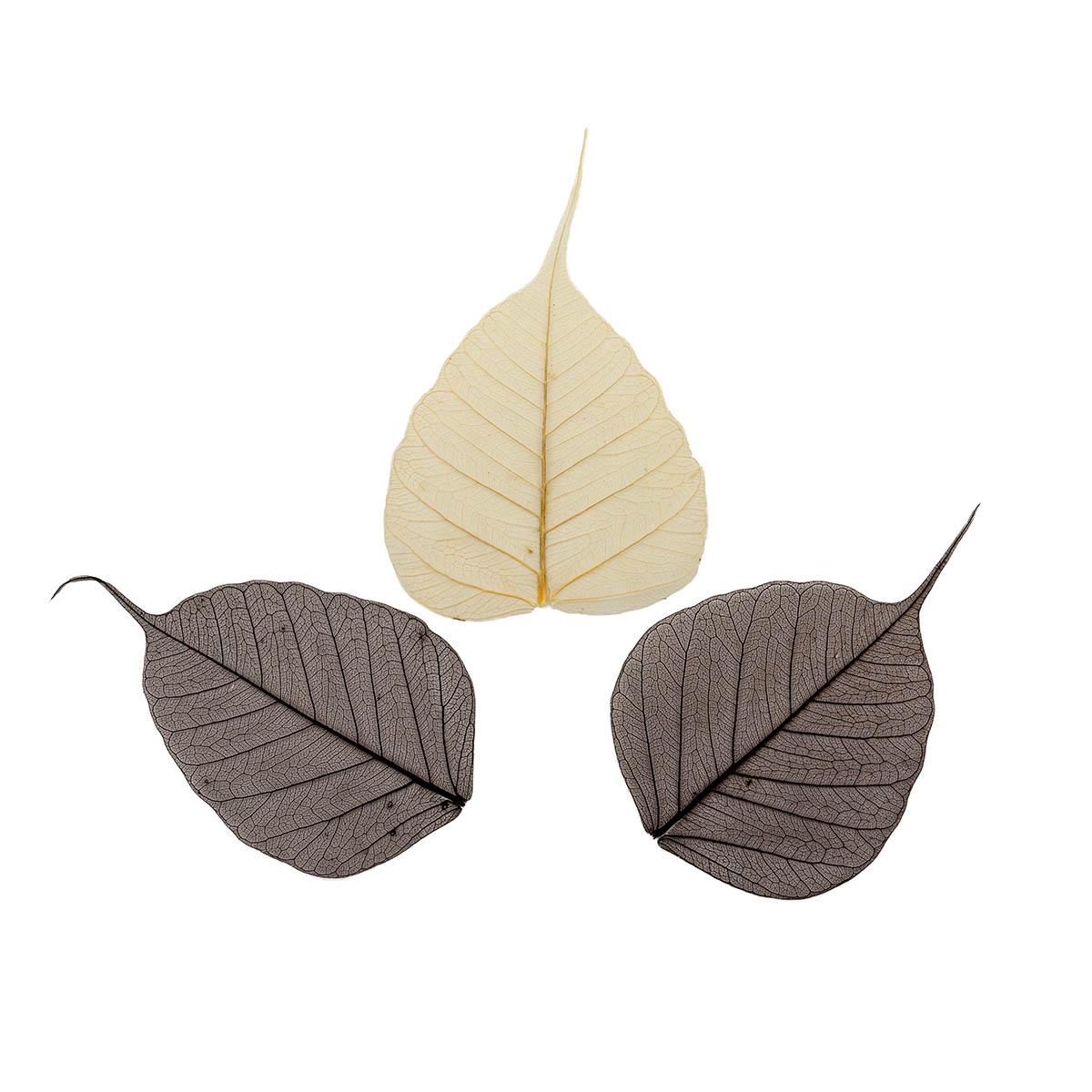 SCB300509 Скелетированные листочки из бананового дерева, коричневый, упак./8 шт., ScrapBerry's