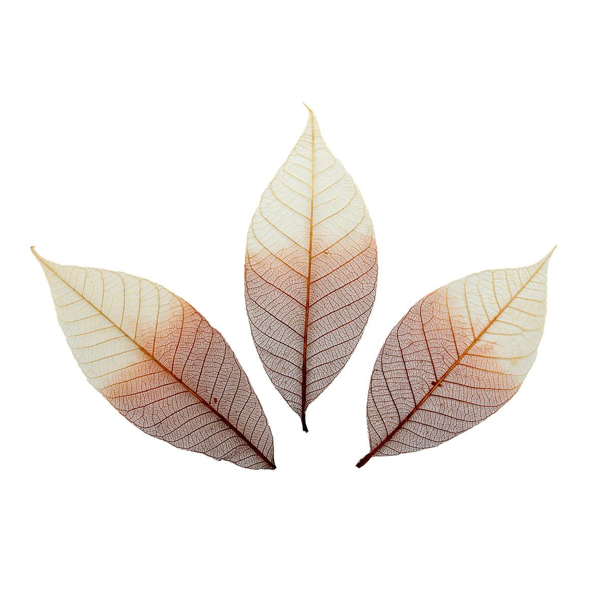 SCB300504 Скелетированные листочки из каучукового дерева, 2-цветный коричневый, упак./8 шт., ScrapBerry's