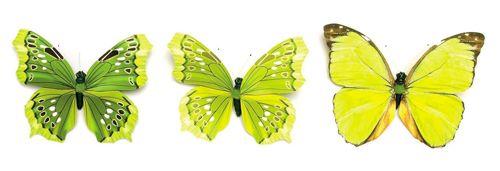 67101015 Бабочки, ассорти, 11см, зеленый цв. Glorex