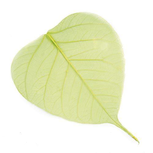 63803954 Скелетированные листочки, ярко-зеленый, 60 г, упак./10 шт, Glorex
