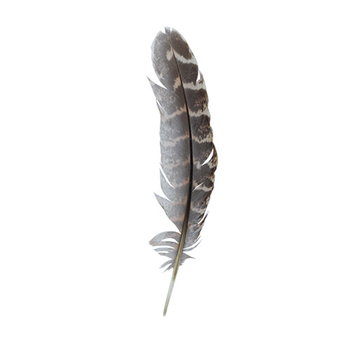 HT108A15 Перо фазана 12-15см, Астра (10шт/упак)