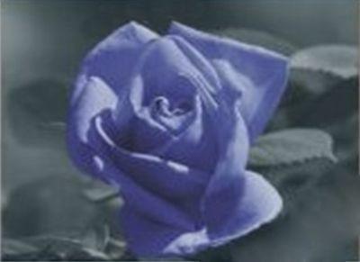 1007 Мозаика Cristal 'Волшебная роза', 50*50 см